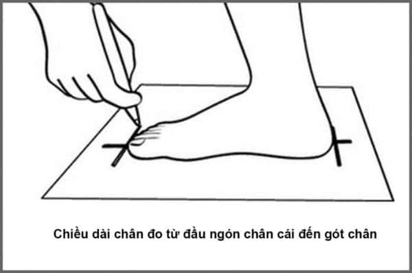 Đo kích thước bàn chân cần lưu ý đo cả hai bên chân và đo vào buổi tối
