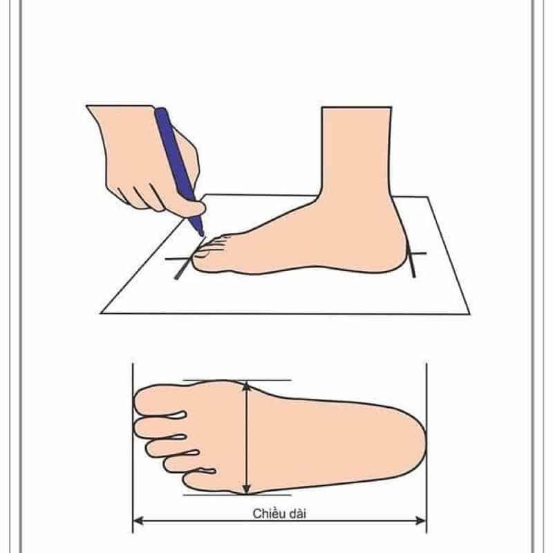 Tiến hành đo chiều dài bàn chân cực đơn giản, cho kết quả chính xác